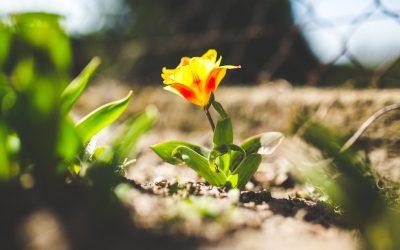 7 Tipps für Ihren Frühlingsgarten