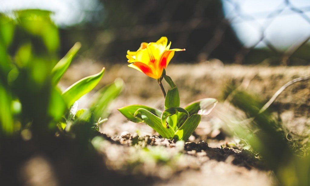 7 Tipps fuer Ihren Frühlingsgarten