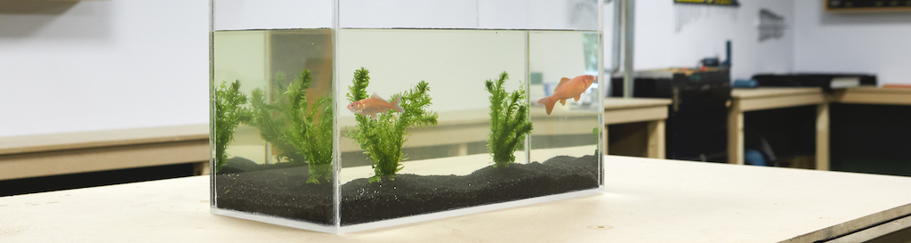 Plexiglas Aquarium selber bauen