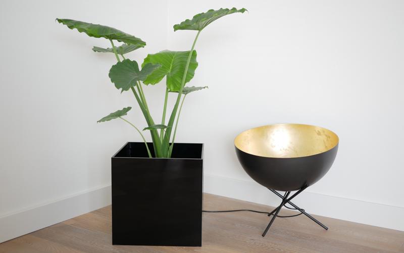 Home Office mit Pflanzen