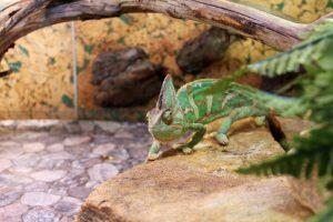 Terrarium gekko