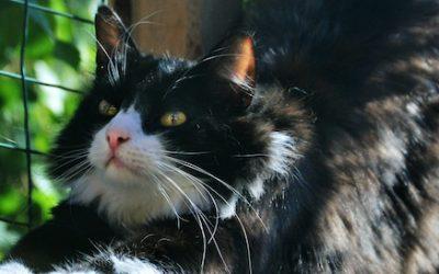 Katzenkäfig selber bauen für Ihren Garten mit Polycarbonat
