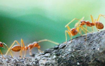 Eine Ameisenfarm selber bauen aus Acrylglas