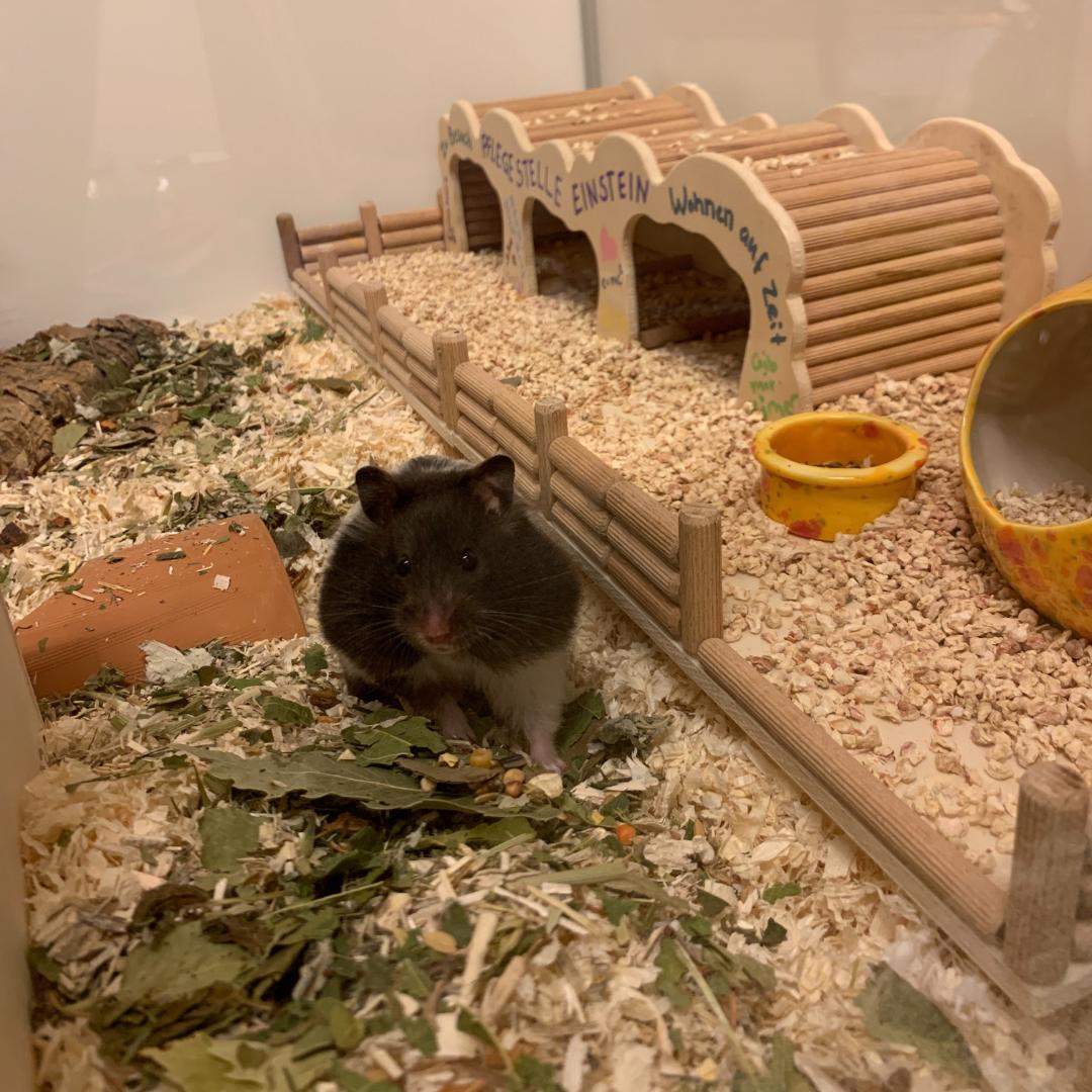 Leicht zu reinigendes Hamstergehege